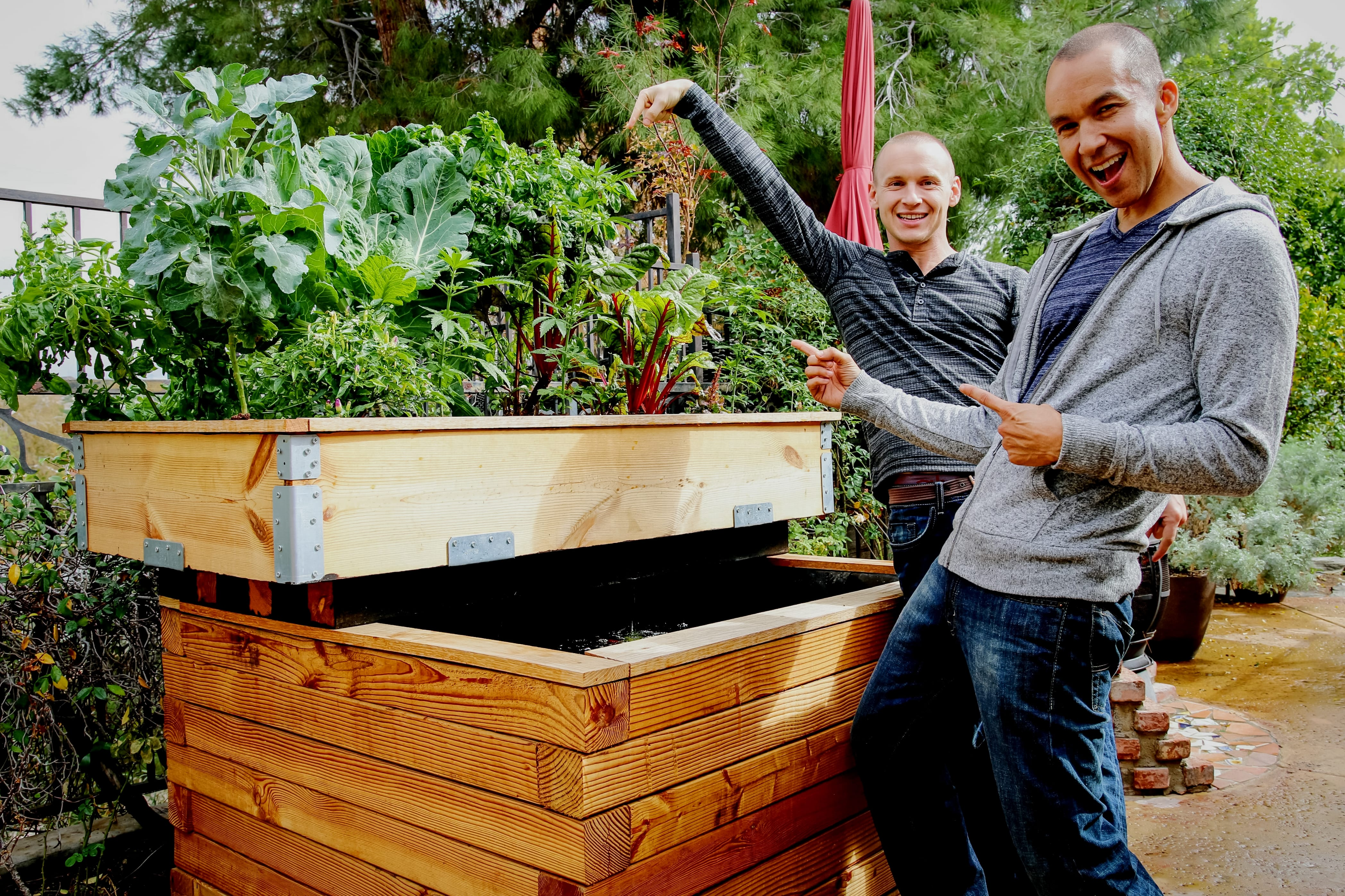 how to make your own backyard aquaponics system