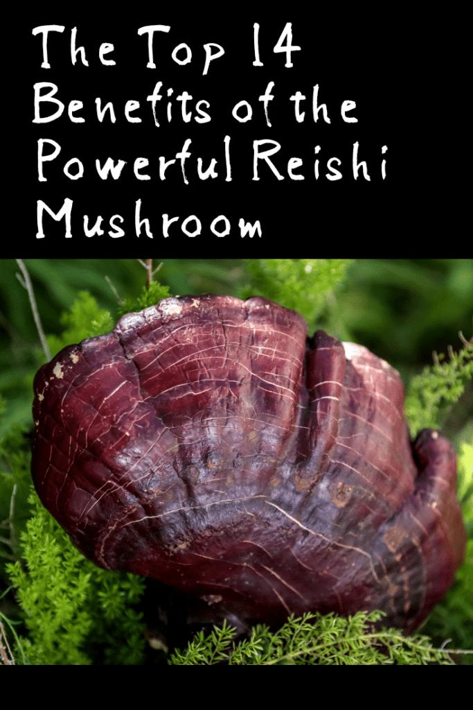 The Top 14 Benefits of the Powerful Reishi Mushroom