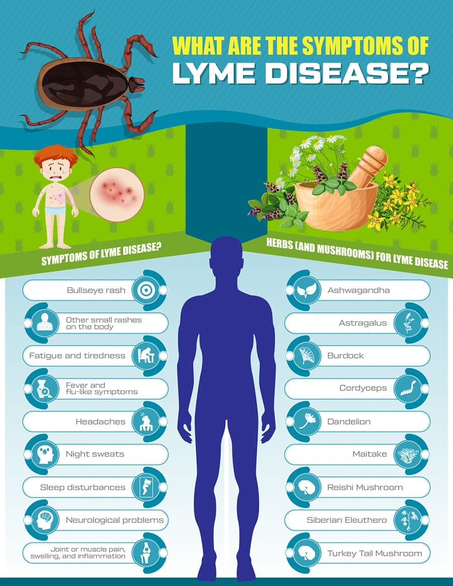 Lyme-Disease-Natural-Treatment-Prevention-Herbs-Infographic